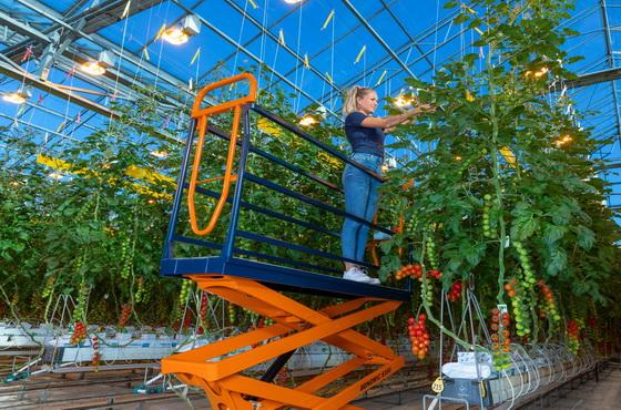 Növelje növényháza hatékonyságát a Berg Hortimotive termékeivel